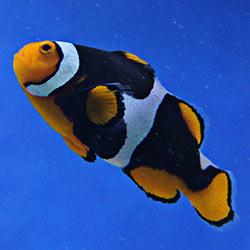 Help save the beloved clownfish from habitat and species destruction at the hands of global warming.