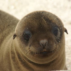 Take action against the killing of sea lions at Oregon's Bonneville Dam.