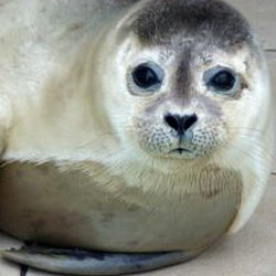 Urge Canadian Prime Minister Justin Trudeau to put an end to his country's barbaric seal hunt.