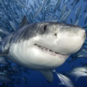 End Shark Finning Once And For All!