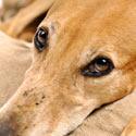 Skechers: Stop Supporting Animal Cruelty!