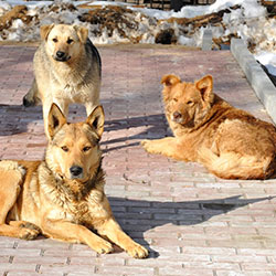 Protect Strays In Olympic Host Cities