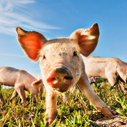 Thank food service firm Bon Appetit for setting the standard for humane animal treatment in the food industry.