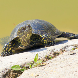 Small turtles seem like great pets, but they carry the dangerous bacteria salmonella. Don't risk your family's health.