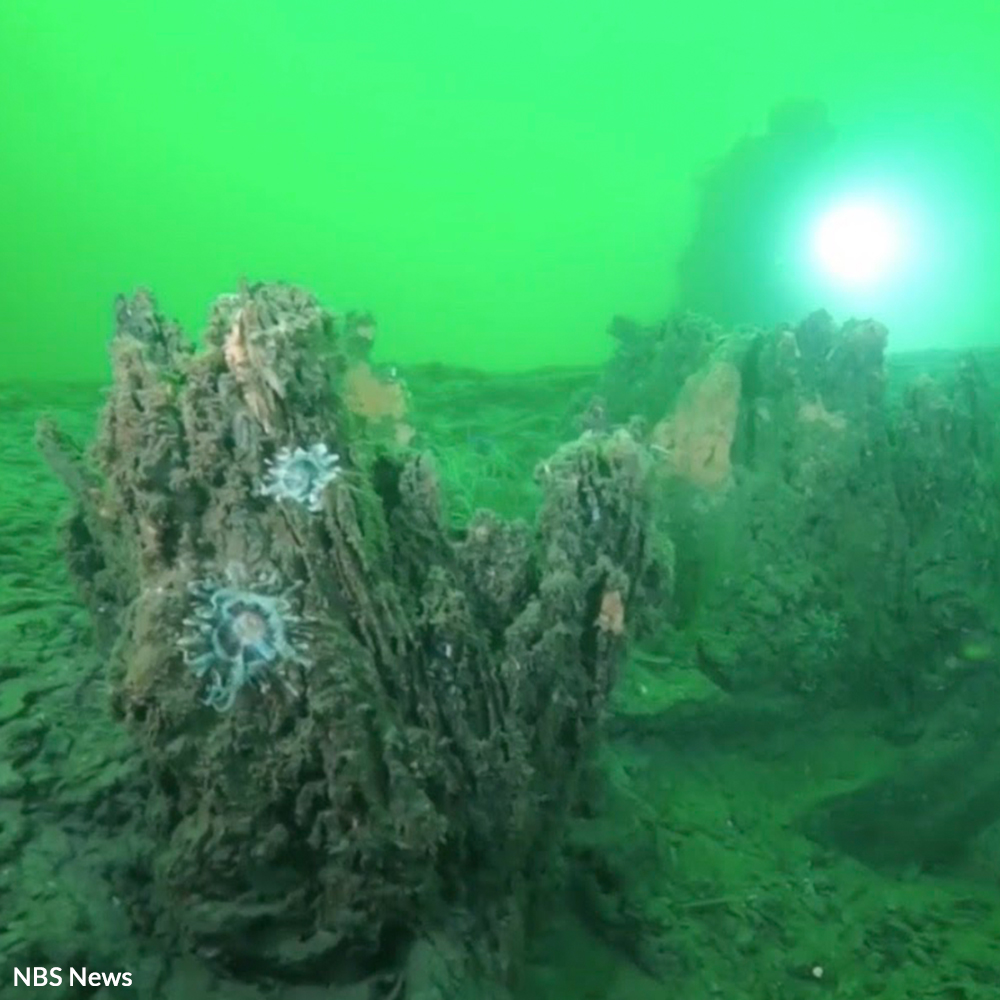 Protect a 60,000-Year-Old Underwater Forest