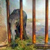 Help Save Elephant Calves from Being Sold to China and Exploited for Entertainment