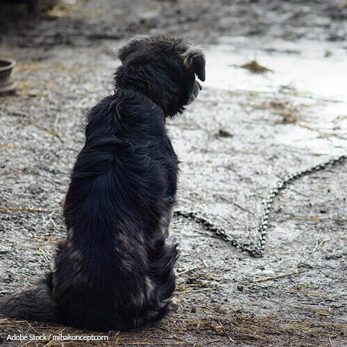 Demand National Record Keeping on Animal Abusers!