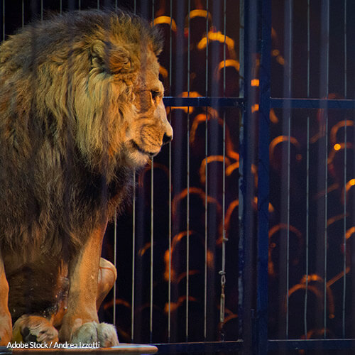 Animals Don't Enjoy The Circus. Let Them Be Free!
