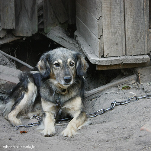 Tell Pennsylvania To Protect Dogs by Enacting Tethering Laws!