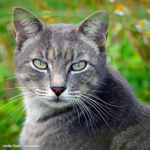 Tell Australia to Stop Killing Feral Cats
