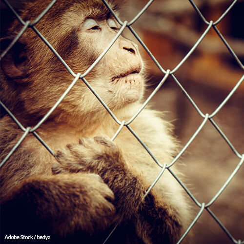 Stop Caging Animals For Entertainment