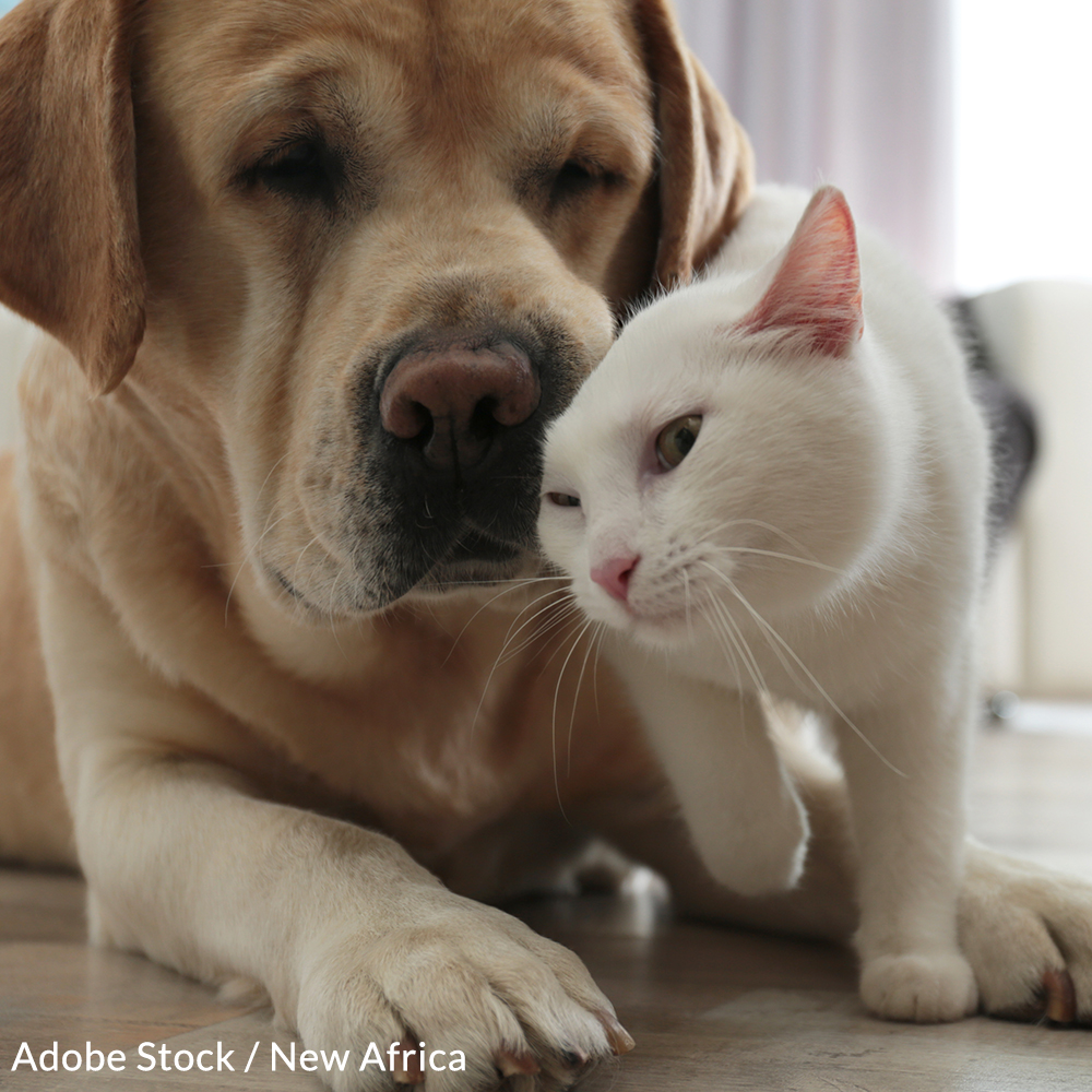Canada: Stop Supporting the Slaughter of Cats & Dogs!