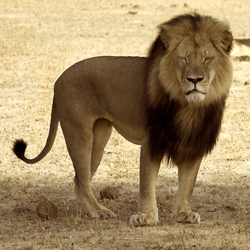 Sign now to do your part to end trophy hunting in Zimbabwe!
