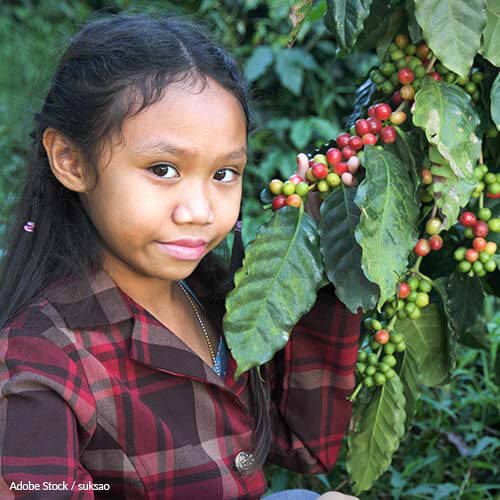 Climate change could render coffee extinct by 2080. So what happens to the 120 million people relying upon the key global crop?