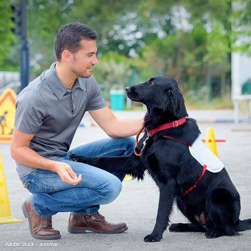 Insurance Should Cover Diabetic Alert Dogs
