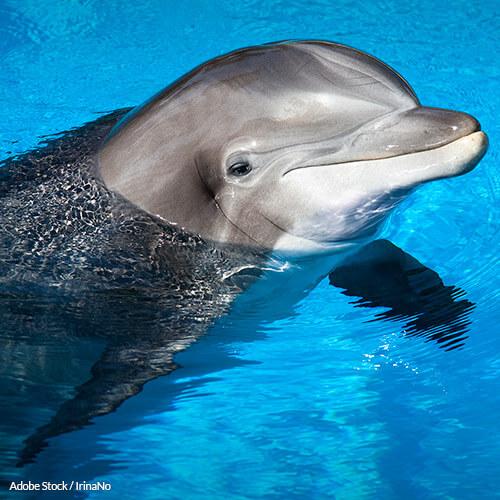 Save the Dolphin-Safe Tuna Label!