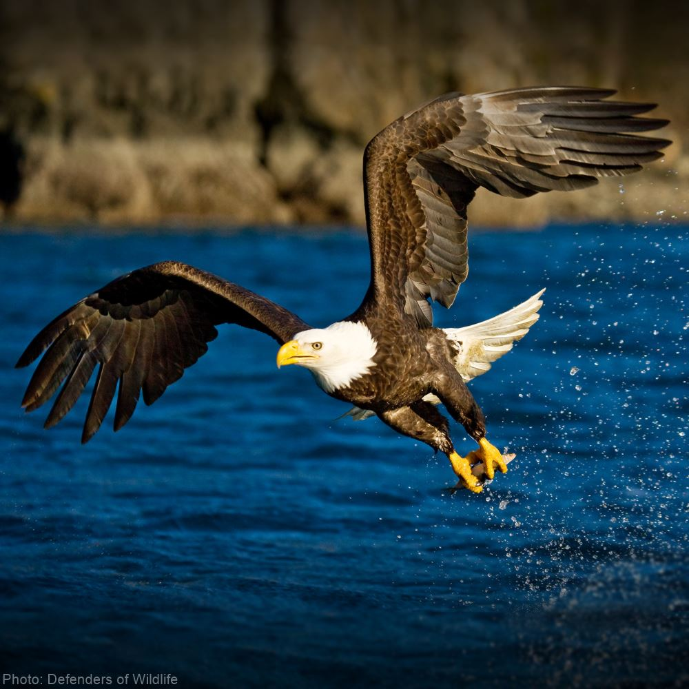 United States Fish & Wildlife Services Must Protect America's Migratory Birds