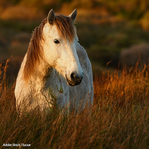 Demand Justice For The Horses Abandoned To Die In Ireland