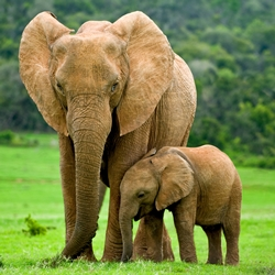 Tell the United Nations to Condemn the Killing and Eating of Elephants