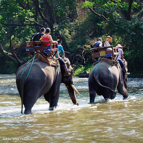 No One Needs To Ride An Elephant
