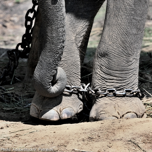 Join Love & Bananas: REFUSE To Take Part In Exploitative Elephant Tourism!