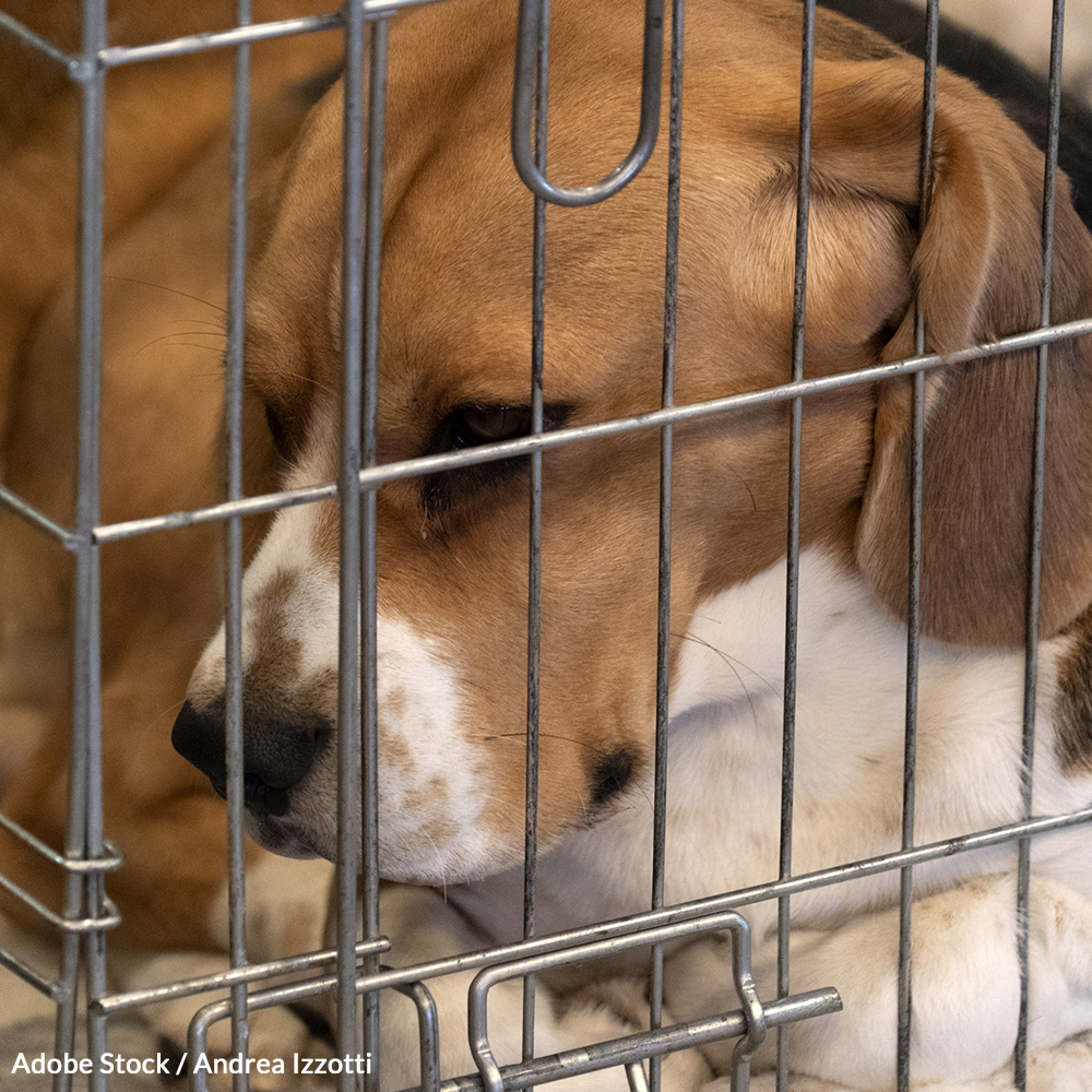 Stop Cruel and Unnecessary Experimentation