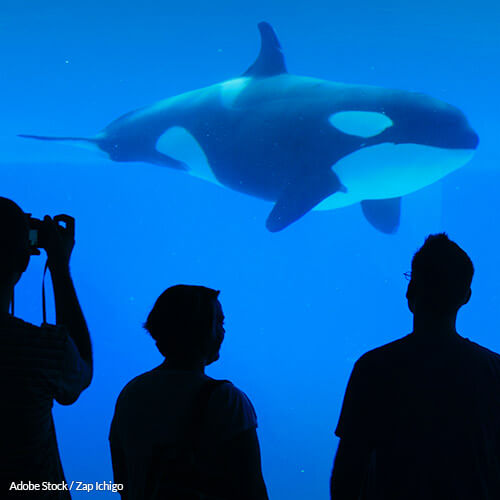 After 45 years in captivity, Lolita is suffering. Demand her release!