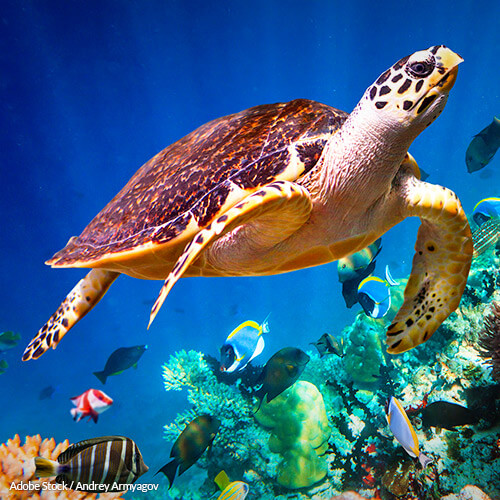 Help mandate that fishermen use safer practices near Hawksbill sea turtle ecosystems!