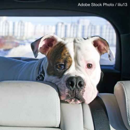 """USDA: We Want the """"Right to Rescue"""" Pets from Hot Cars"""