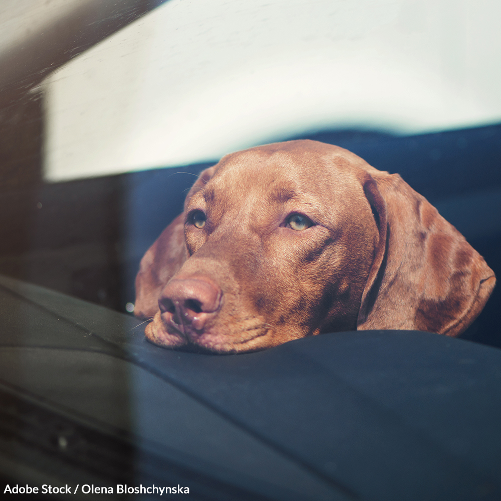 Demand A National Right To Rescue Dogs In Hot Cars