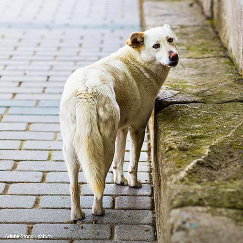 India: Enact Humane Management for Stray Dog Populations