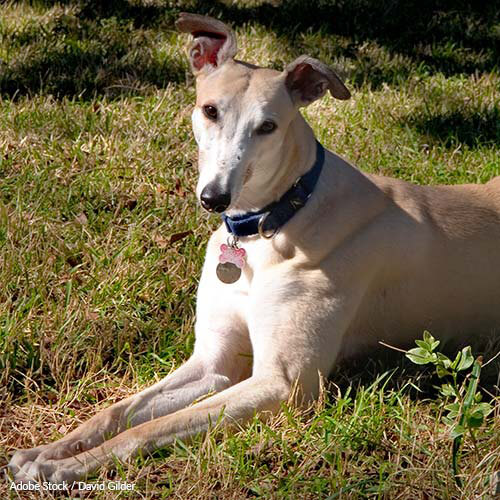 Greyhounds are being killed in the name of science. Help stop this sick practice!