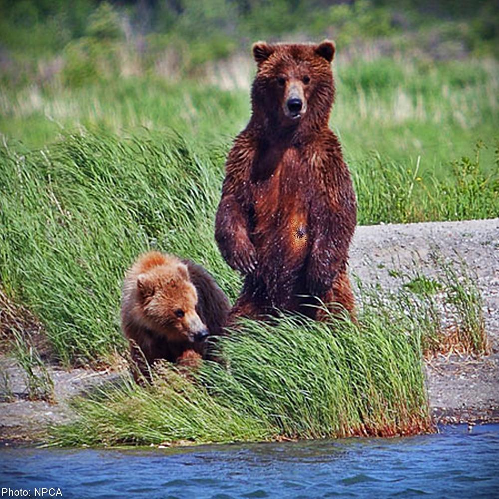 Speak Up for National Park Wildlife!