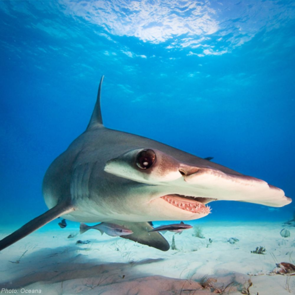 URGENT: Fins from up to 73 million sharks end up in the global fin trade every year.