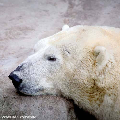 Polar Bears Aren't Meant to Live in Shopping Malls!