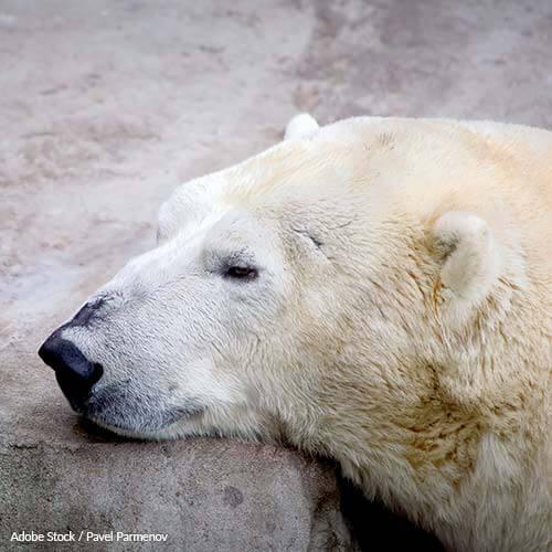 Help close this inhumane shopping mall aquarium and release its mishandled animals to loving sanctuaries!