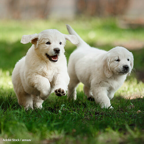 Outdoor Playtime for Puppies Should be Mandatory!