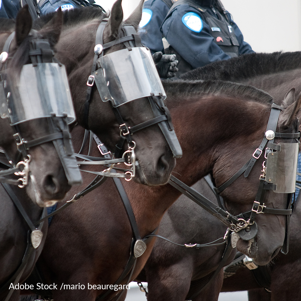 Ban The Use Of Police Horses At Protests