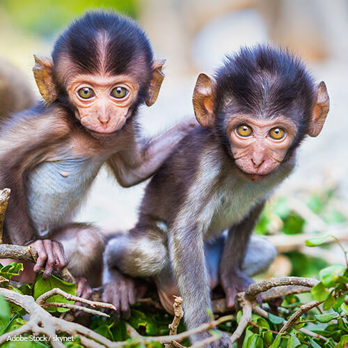 A pet primate may seem cute, but keeping them is a risky and inhumane practice