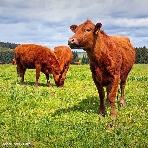 Cattle grazing on federal lands is leading to the destruction of natural habitats and wildlife. This practice needs to end!
