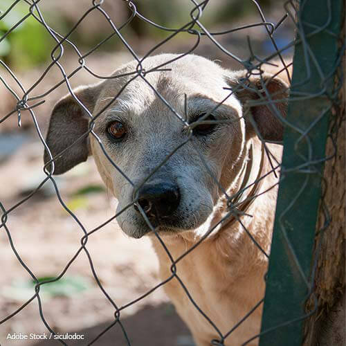 Boycott the 2018 Winter Olympics to Save Dogs from Dinner Plates!