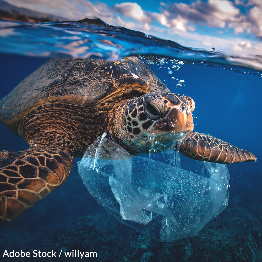 Take the Plastic Bag Pledge and Cut Out Pollution!