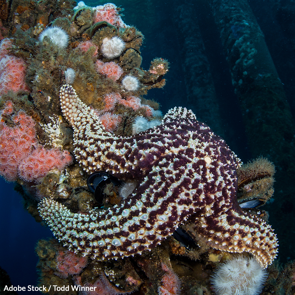 Decommissioning oil rigs costs millions and destroys thriving marine ecosystems. Repurpose them as reef habitat!
