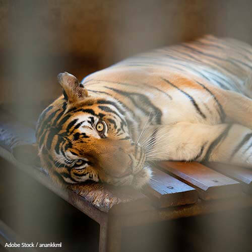 Ringling: Release your Animals Only to Accredited Sanctuaries