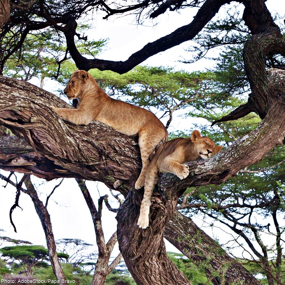 Save Tanzania's World Heritage Selous Reserve!