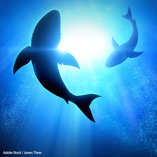 Stop Killing Sharks For Dubious Bone Supplements