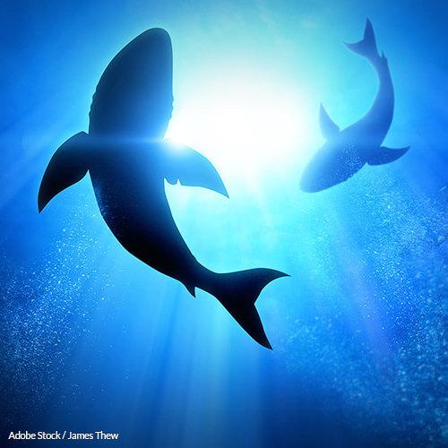 Stop Killing Sharks For Dubious Bone Supplements