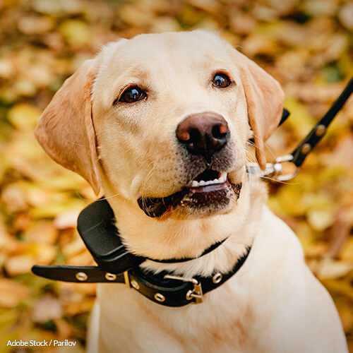 Tell the USDA to step up to protect dogs from injury and death from shock collars.