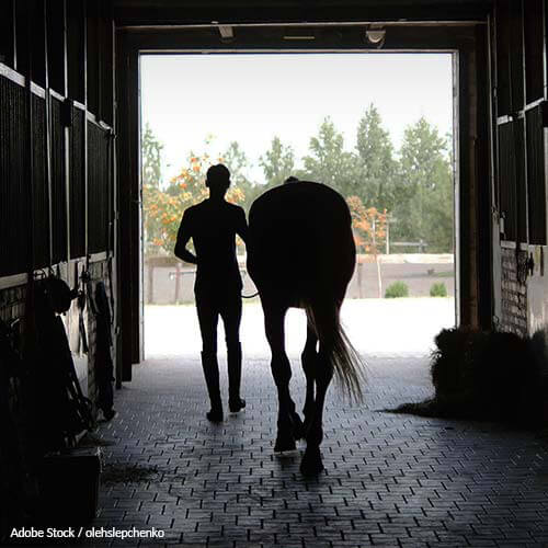 Trainers: Stop Hurting Horses For Show Tricks!