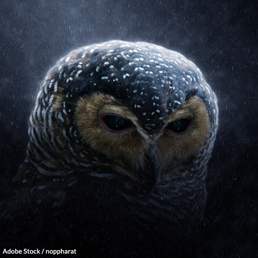 Restore Critical Habitat to the Spotted Owls | Take Action @ The Rainforest Site